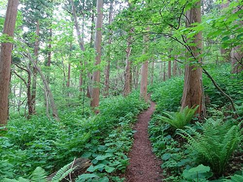 木立の中で~宮の森コース