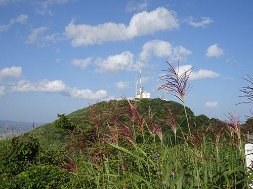 ススキ咲く入江山