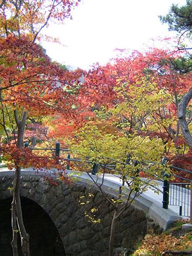 函館公園 白川橋